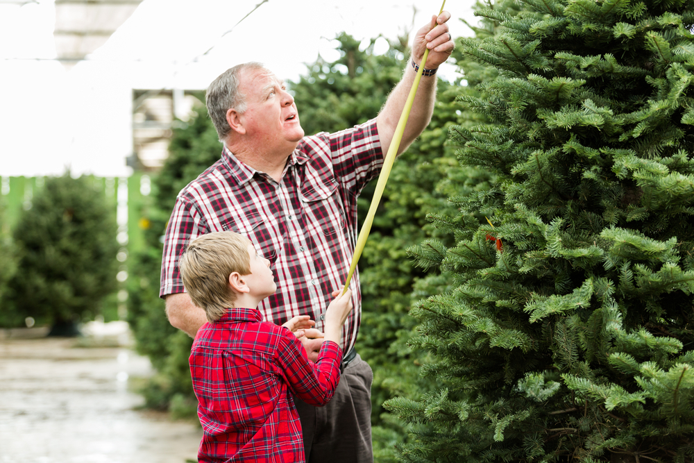 Grandpa and boy picking out a Christmas tree